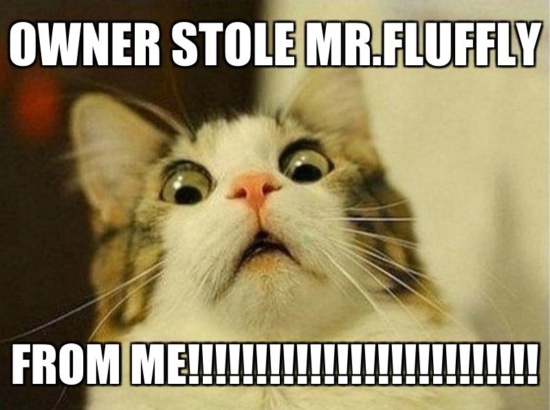 owner stole mr.fluffly; from me!!!!!!!!!!!!!!!!!!!!!!!!!!