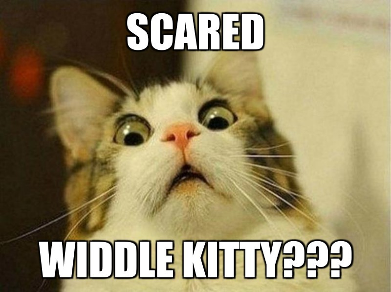 widdle kitty???; Scared