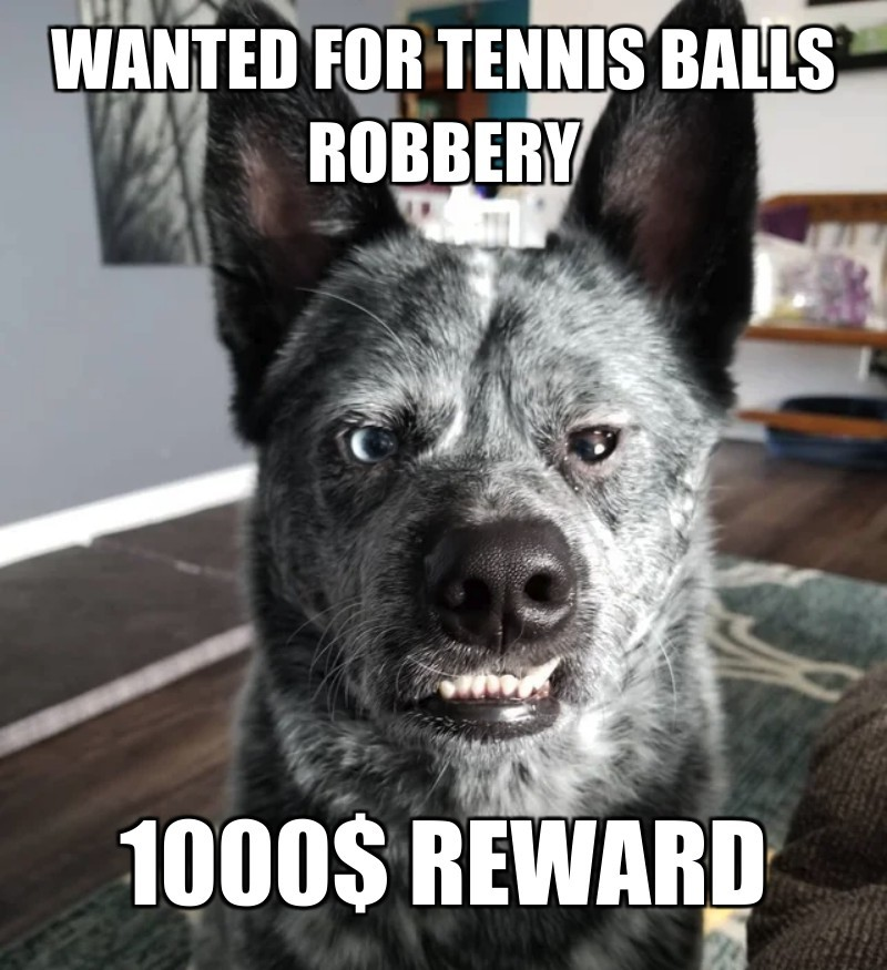 1000$ Reward; Wanted For Tennis balls robbery