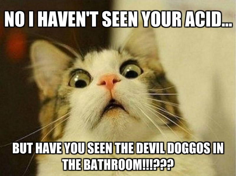 no i haven't seen your acid...; but have you seen the devil doggos in the bathroom!!!???