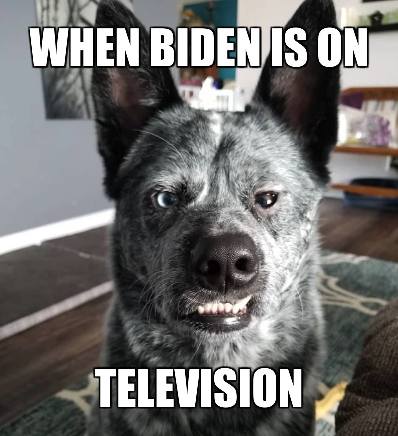 TELEVISION; when biden is on